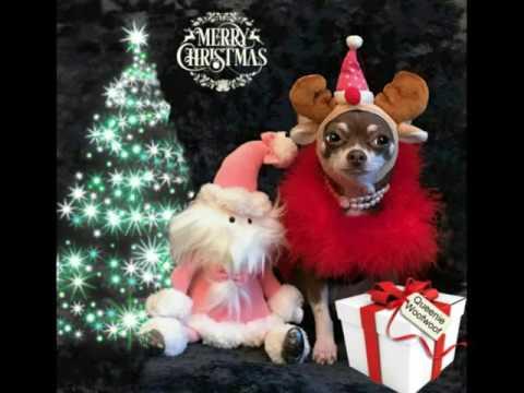 Queenie Woofwoof www.licksoflondon.com
