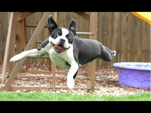 Dog Fails - A Funny Dog Jump Fails Compilation || NEW HD
