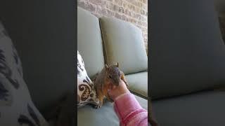 Making a squirrel laugh
