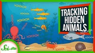eDNA: How Scientists See Hidden Animals