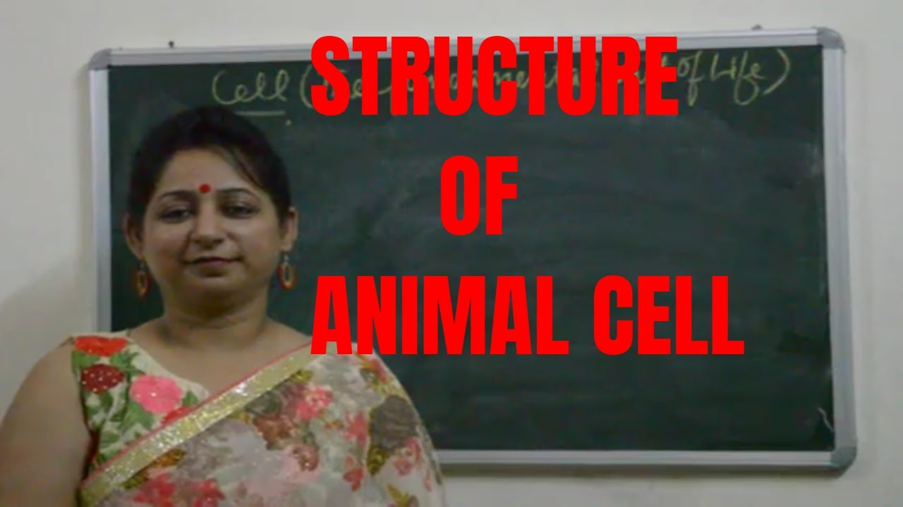 Structure of Animal Cell (Class 9th of ICSE and CBSE ...