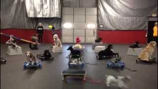 Cleveland-akron Dog Obedience Training. Multiple Dogs Re-called One At A Time
