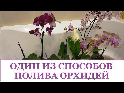 Что такое орхидея мультифлора?