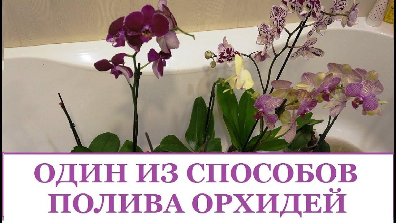 Орхидеи Ашан, Оби, Икея 12 июня 2017 г. - YouTube