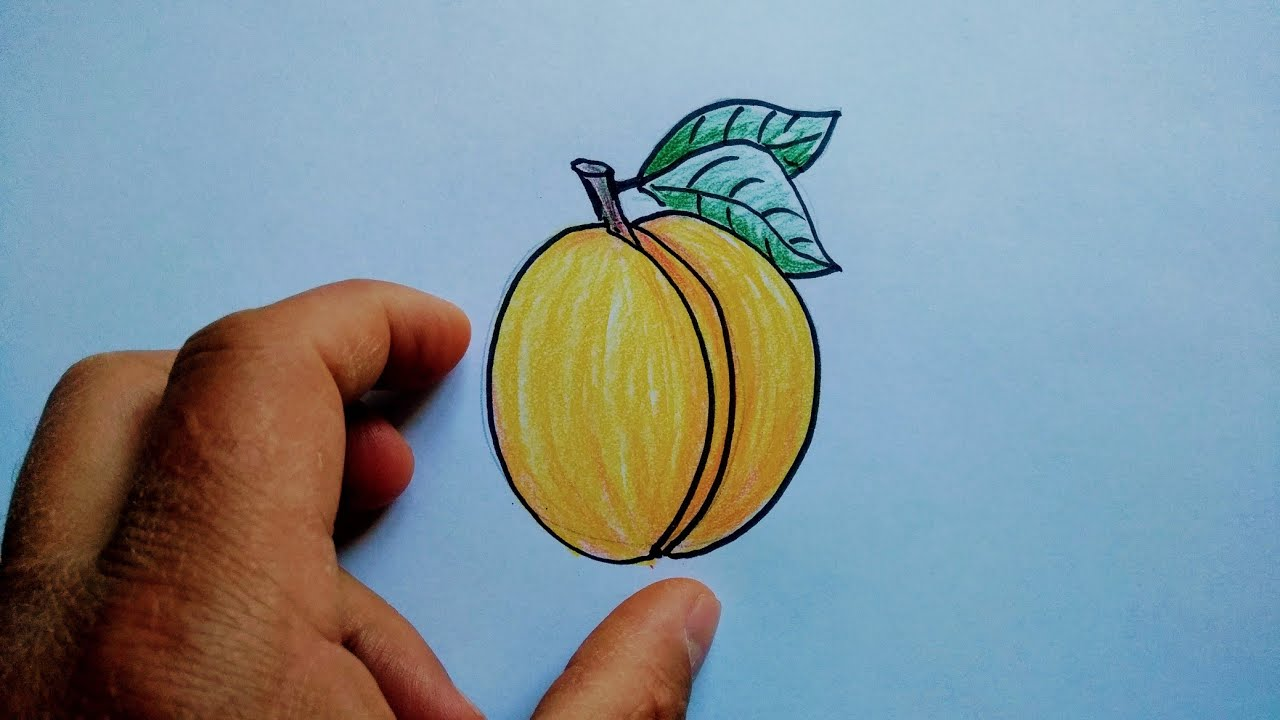 Kayısı Çizimi / kolay meyve çizimleri / Yerli malı haftası resim çizimi