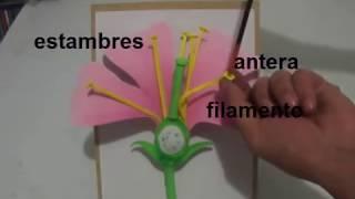Partes de la Flor (maqueta tutorial)