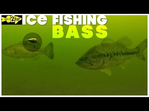 How To Ice Fish Largemouth Bass With Rattle Baits