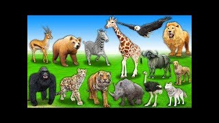 Learn Forest Animals Names & Sounds For Kids - Wild Animals Finger Family Rhymes For Children