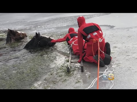 Northeast Pennsylvania Communtiy Comes Together To Save 2 Horses From Icy Lake
