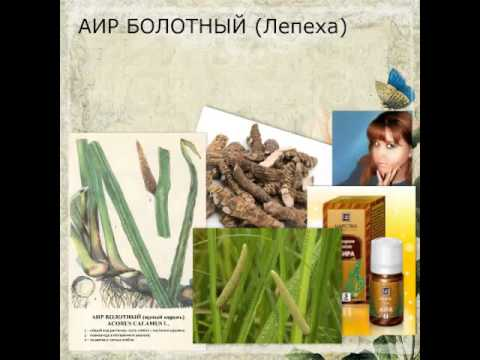 Аир (растение) — Википедия