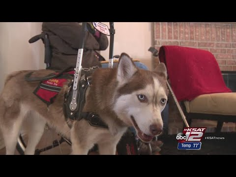Ease of online service dog registry pollutes legitimate needs