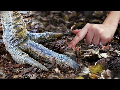 هذا الحيوان المرعب عاش مع الديناصورات , 9 حيوانات عاشت مع الديناصورات وبقيت حية ليومنا هذا  - نشر قبل 5 ساعة