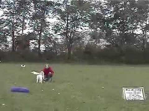 Career Dog Training Business School