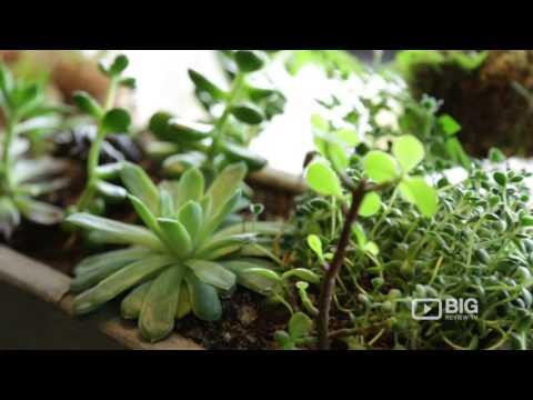 Wallflower a Flower Shop in Queensland offering best Florist and Flowers