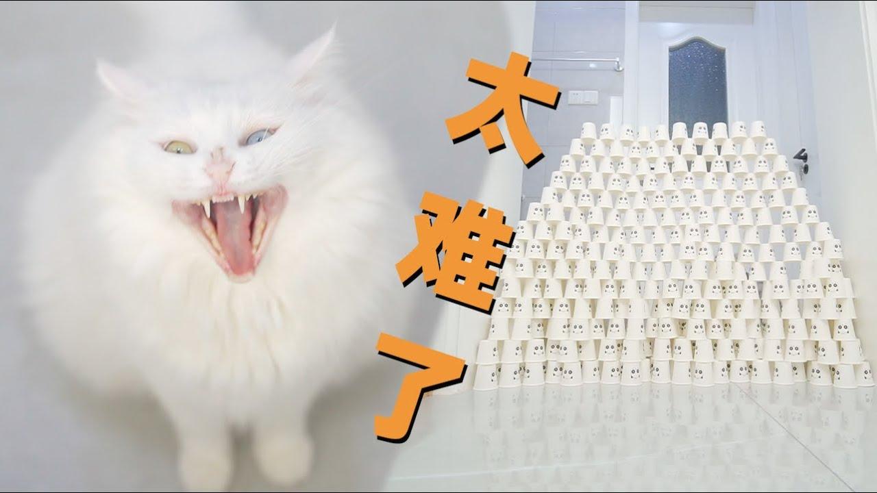 一次性玩遍所有猫咪纸杯游戏,猫:太难了