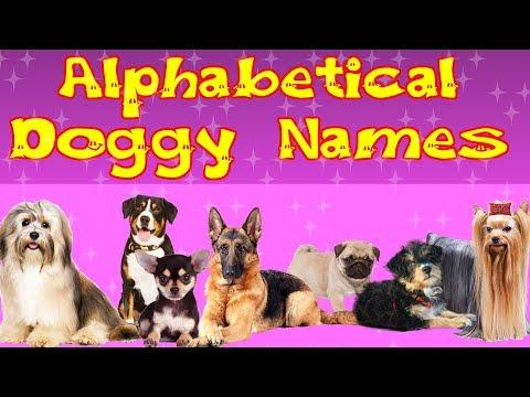 Alphabetical Doggy Names | Top 10 Dog Breeds  | Kid2teentv