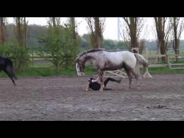 Springtræning uden sadel + fald!