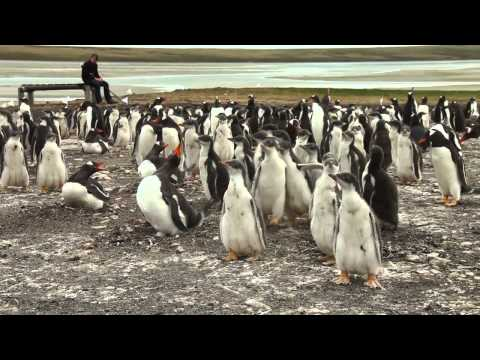 Photographers Diary - The Falkland Islands