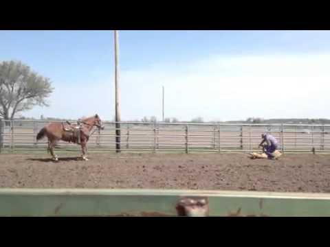 Sorrel horse 3
