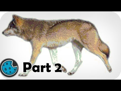 Incredibly Realistic Wolf Animation Part 2