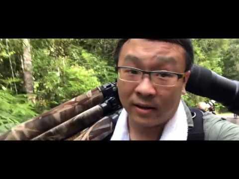 Malaysia Bird Photography 2018 馬來西亞鳥攝之旅2018 ( with English subtitles)