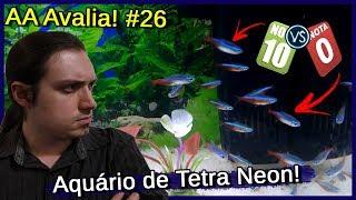 Avaliei um Aquário de Tetra NEON! - AA Avalia #26
