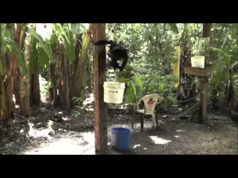 Wildlife Project in Guatemala
