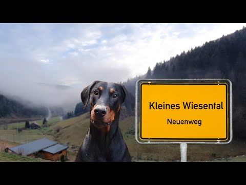 Ein Dobermann In Neuenweg - Kleines Wiesental