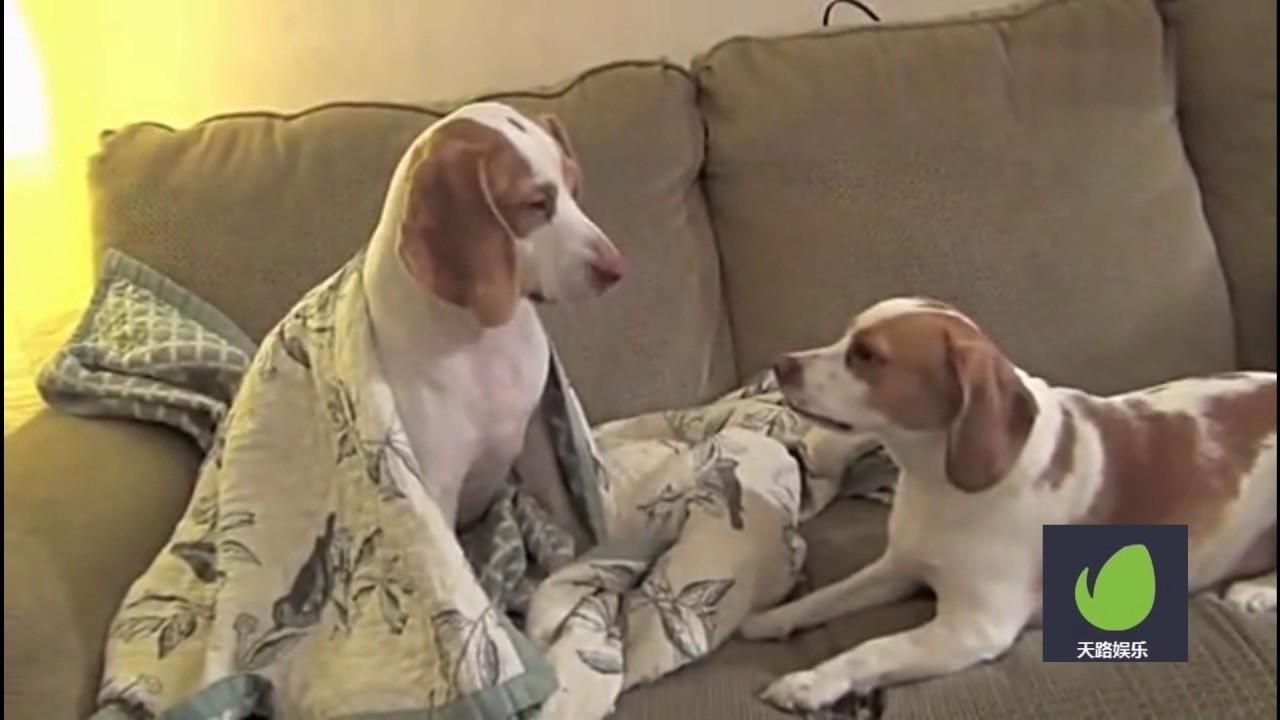 狗狗视频大全搞笑_宠物搞笑动物视频集锦:有起床气的狗狗! - YouTube