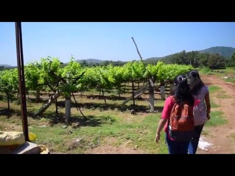 Bangalore's Best Wine Tasting Tour - A Journey of Aroma with Thrillophilia