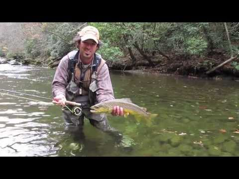 Fly Fishing for Large Brown Trout in the Smokies in the Fall