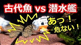 古代魚VS潜水艦 まさかのトラブル!? 【サブマリナーカメラ】[submariner camera]