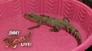 Jimmy Kimmel Pranks Guillermo with Baby Alligator