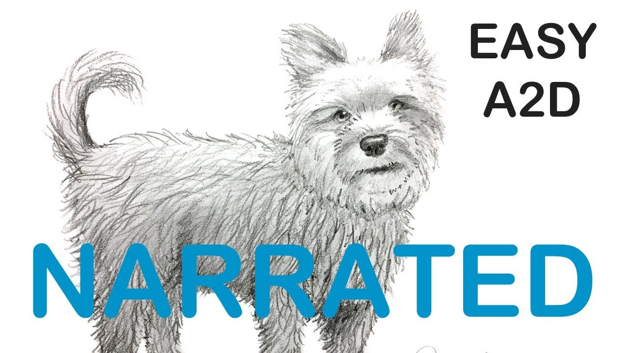 How To Draw A Yorkie Terrier Dog Narrated Step By Step
