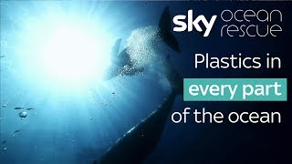 Plastics in every part of the ocean