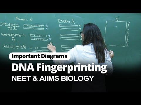 DNA Fingerprinting | Important Diagram For NEET & AIIMS Biology | Misostudy