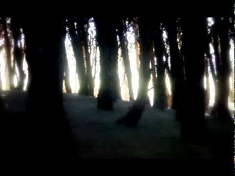 Agalloch - The Wilderness (lyrics)