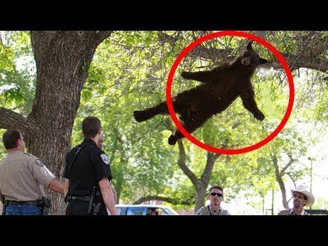Moments You Wouldn't Believe if They Weren't Recorded! #8