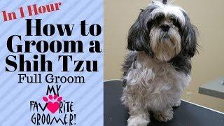 How to Groom a Shih Tzu