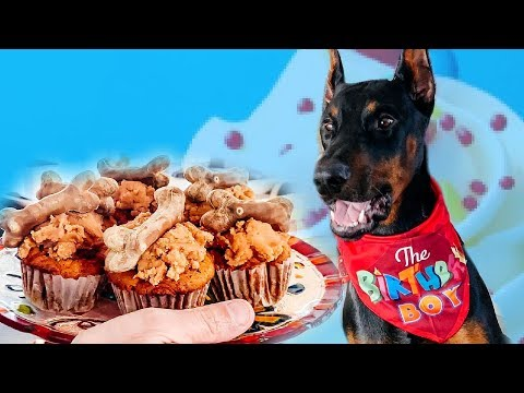Doberman Gets Spoiled (Cyber's 1st Birthday Vlog)