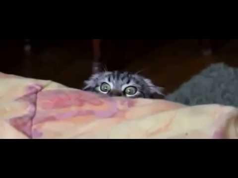 Кошка смотрит фильм ужасов - Видео приколы про кошек