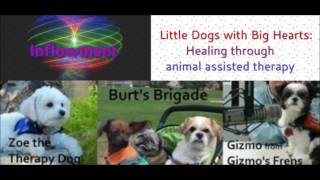 Inflowment Little Dogs With Big Hearts: Healing Through Animal Assisted Therapy