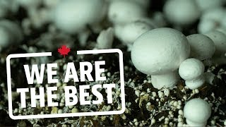 Take a tour of the largest organic mushroom farm in Canada   We Are The Best