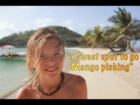 "SE2 EP36. ""A sweet spot to go Mango picking"" in St Anne, Martinique - Sailing the Caribbean"