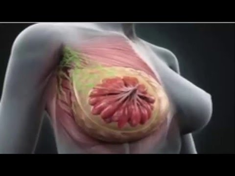 Growth Of Functioning Human Breast Tissues