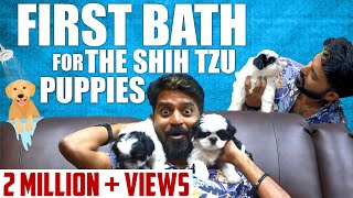 First bath for the Shih Tzu puppies & Grooming for Oreo I Mr Ma Ka Pa