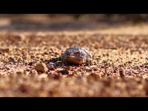 Wave Rock on Vimeo