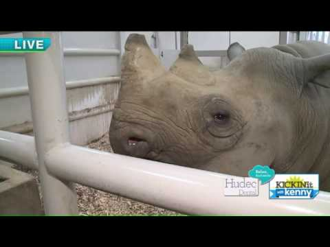 Cleveland MetroParks Zoo expecting a baby rhino!