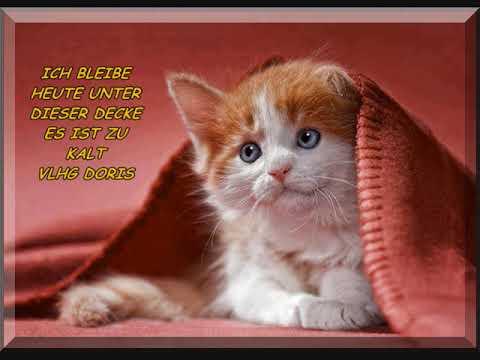 Guten Morgen Einen Lieben Morgen Gruß Schicke Ich Dir Und Wünsche Dir Einen Schönen Tag