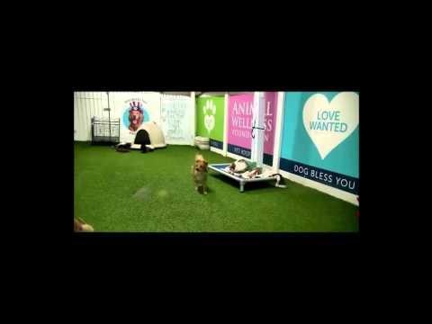 Dog Play Area Webcam (Animal Wellness Foundation Center)